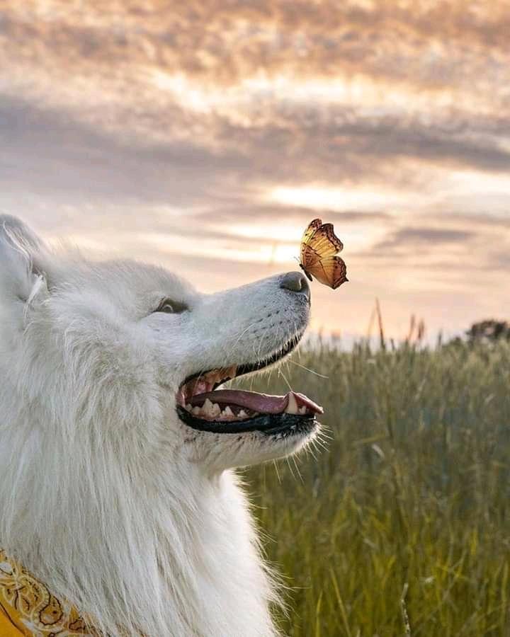 Come comportarsi davanti ad un animale abbandonato?