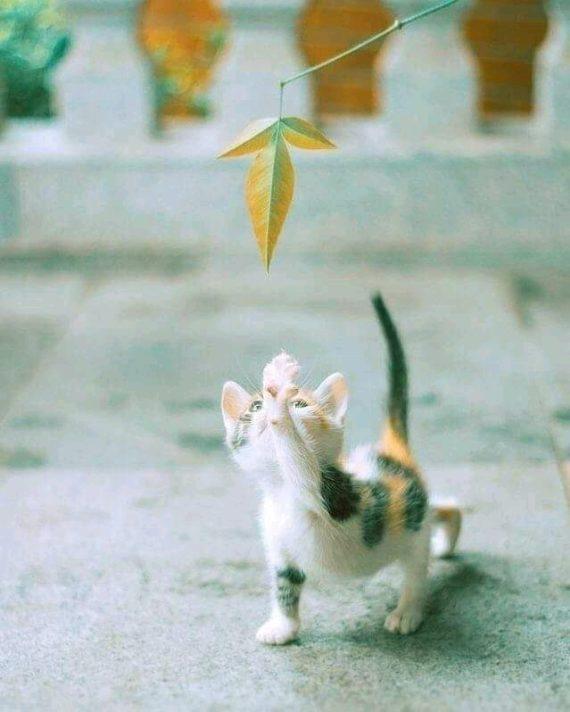 FIV e FELV: Cosa sono e quando testare i nostri gatti?