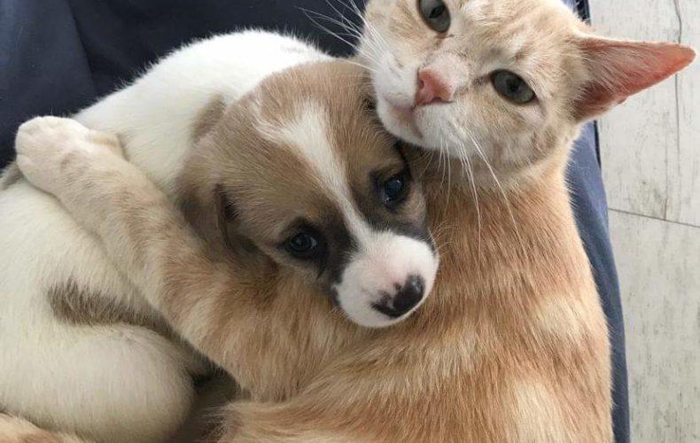 Il mastocitoma nel cane e nel gatto