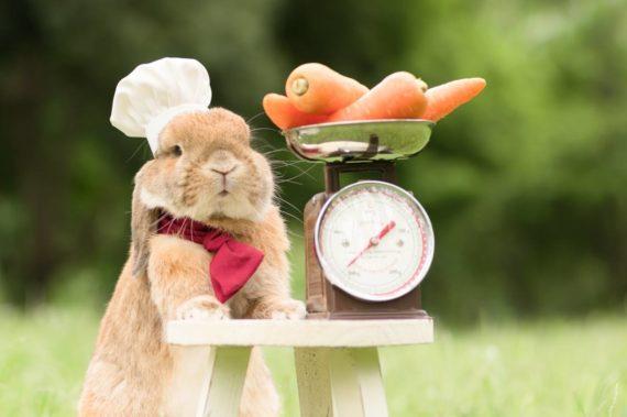 L' alimentazione del coniglio da compagnia